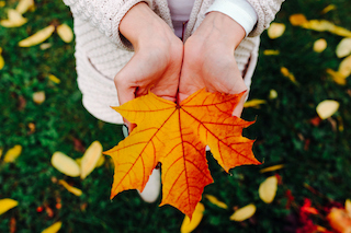 girl holds in hands beautiful autumn leaf